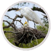 Great Egret Chicks - Sibling Rivalry Round Beach Towel by Carol Groenen