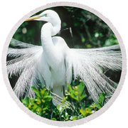 Great Egret Displaying Breeding Plumage Round Beach Towel