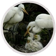 Great Egret Family 2 Round Beach Towel