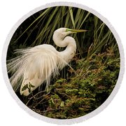 Great Egret In Breeding Plumage Round Beach Towel