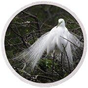 Great Egret In Tree Round Beach Towel