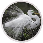Great Egret Preening Round Beach Towel