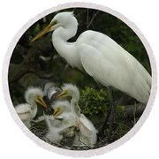 Great Egret With Young Round Beach Towel