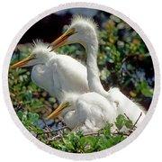 Great Egrets Round Beach Towel