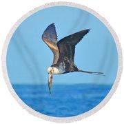 Great Frigate Bird Round Beach Towel
