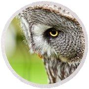 Great Gray Owl Close Up Round Beach Towel