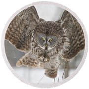 Great Gray Owl Pictures 634 Round Beach Towel