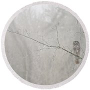 Great Gray Owl Pictures 645 Round Beach Towel