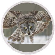 Great Gray Owl Pictures 648 Round Beach Towel