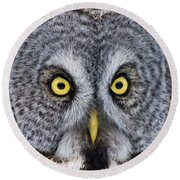 Great Gray Owl Pictures 680 Round Beach Towel