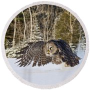 Great Gray Owl Pictures 740 Round Beach Towel