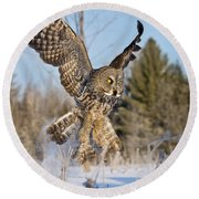 Great Gray Owl Pictures 767 Round Beach Towel