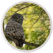 Great Gray Owl Pictures 779 Round Beach Towel