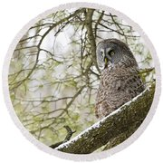 Great Gray Owl Pictures 804 Round Beach Towel
