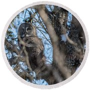 Great Grey In The Woods Round Beach Towel