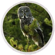 Great Grey Owl On The Hunt Round Beach Towel
