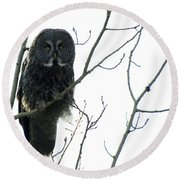 Great Grey Owl On The Lookout Round Beach Towel