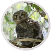 Great Horned Owl Fledgling  Round Beach Towel