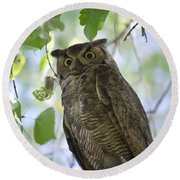 Great Horned Owl On A Branch  Round Beach Towel