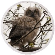 Great Horned Owlet 2 Round Beach Towel