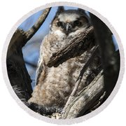 Great Horned Owlet Finishes Lunch Round Beach Towel