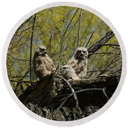 Great Horned Owlets 1 Round Beach Towel