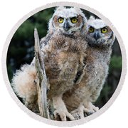Great Horned Owlets Round Beach Towel