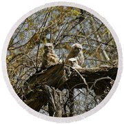 Great Horned Owlets Photo Round Beach Towel