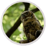 Great Horned Youngster Round Beach Towel