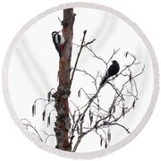 Great Spotted Woodpecker And A Blackbird. Dude What Are You Doing Round Beach Towel