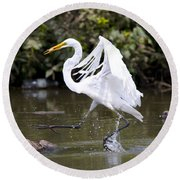 Great White Egret And Turtle Friends1 Round Beach Towel