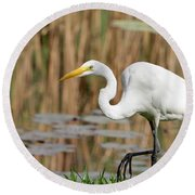 Great White Egret By The River Round Beach Towel by Sabrina L Ryan