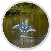Great White Egret In Sunlight Round Beach Towel