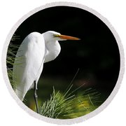 Great White Egret In The Tree Round Beach Towel
