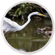 Great White Egret Looking For Fish 1 Round Beach Towel