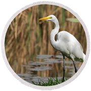 Great White Egret Taking A Stroll Round Beach Towel