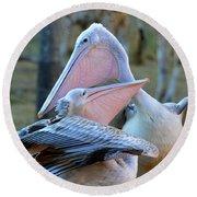 Great White Pelicans Round Beach Towel
