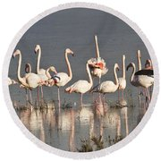 Greater Flamingos At Laguna De La Fuente De Piedra Round Beach Towel