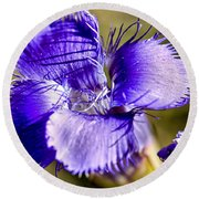 Greater Fringed Gentian Round Beach Towel