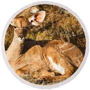 Greater Kudu Calf Round Beach Towel