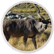 Greater Kudu Grazing Round Beach Towel