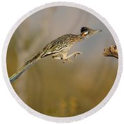 Greater Roadrunner Leaping Round Beach Towel