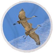 Greater Sandhill Cranes In Flight Round Beach Towel