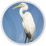 Greater White Egret Round Beach Towel