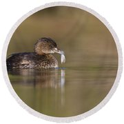 Grebe With Feather Round Beach Towel