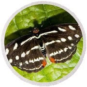 Grecian Shoemaker Butterfly Round Beach Towel
