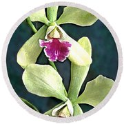 Green And Purple Cattleya Orchids Round Beach Towel