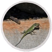 Green Anole Lizard Vs Wolf Spider  Round Beach Towel