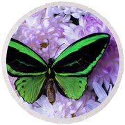 Green Butterfly And Mums Round Beach Towel