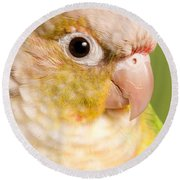 Green-cheeked Conure Pineapple P Round Beach Towel